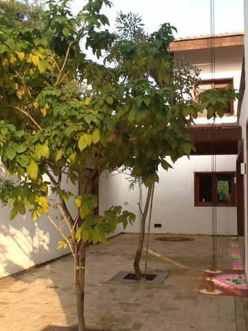 Paula Tree2