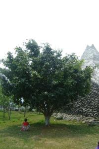 Tree1_small
